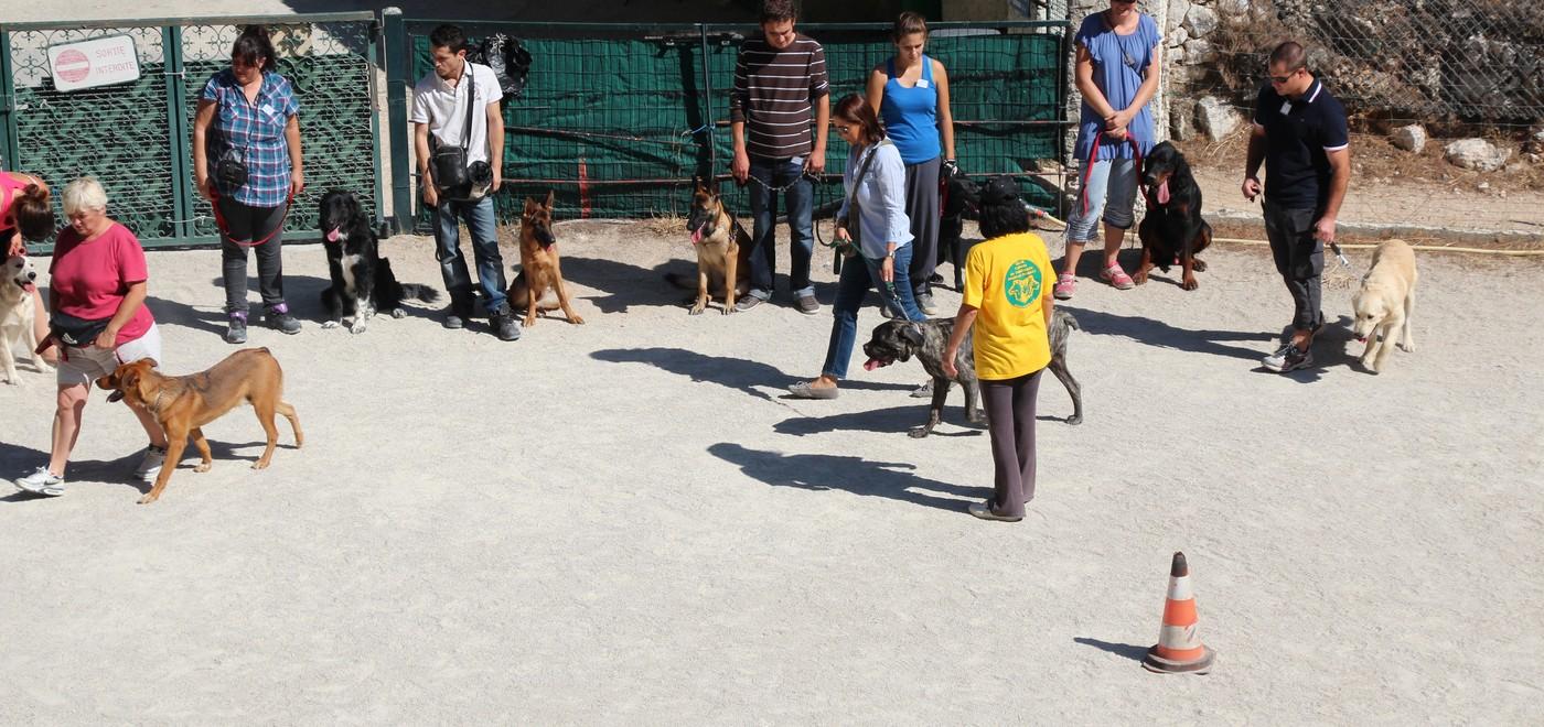 club canin hyeres